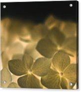 Glow Blossoms Acrylic Print