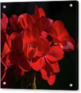 Glowing Flower In The Dark Acrylic Print