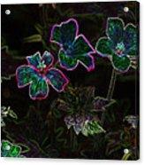 Glowing Flowers Acrylic Print
