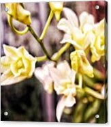 Glowing Garden Acrylic Print