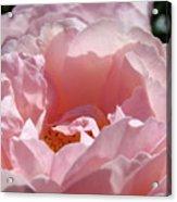 Glowing Pink Rose Flower Giclee Prints Baslee Troutman Acrylic Print