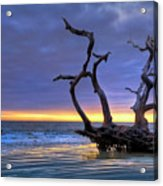 Glowing Sands At Driftwood Beach Acrylic Print
