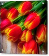 Glowing Tulips Acrylic Print
