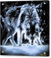 Glowing Wolf In The Gloom Acrylic Print