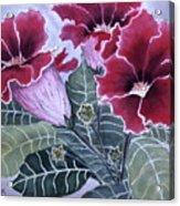 Gloxinias Acrylic Print