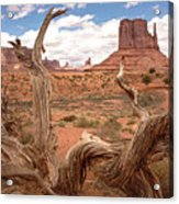 Gnarled Tree At Monument Valley  Acrylic Print
