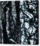 Gnarled Vines Surround A Tree Acrylic Print