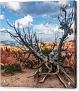 Gnarly - Bryce Canyon Acrylic Print