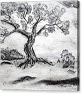 Gnarly Oak Acrylic Print