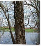 Gnarly Tree 4 Acrylic Print