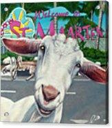 Goats Of St. Maarten- Sofie Acrylic Print