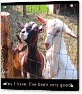 Goats Poster Acrylic Print
