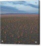 Gobi Desert Acrylic Print