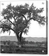Goddess Tree 3 Acrylic Print by Matthew Angelo