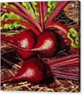 God's Kitchen Series No 2 Beetroot Acrylic Print