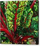 God's Kitchen Series No 7 Swiss Chard Acrylic Print