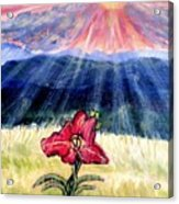 God's Ray's Shining On A Red Lily Flower In The Spring Acrylic Print