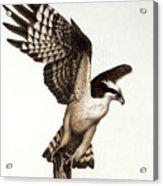 Going Fishin' Osprey Acrylic Print