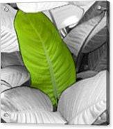 Going Green Lighter Acrylic Print