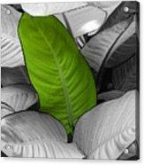 Going Green Acrylic Print