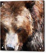Bear // Gold Acrylic Print