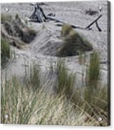 Gold Beach Oregon Beach Grass 15 Acrylic Print
