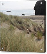 Gold Beach Oregon Beach Grass 24 Acrylic Print