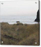 Gold Beach Oregon Beach Grass 4 Acrylic Print