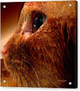 Gold Cat Profile Acrylic Print