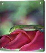 Gold Dust Day Gecko 1 Acrylic Print