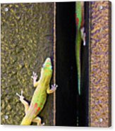 Gold Dusted Day Gecko Acrylic Print