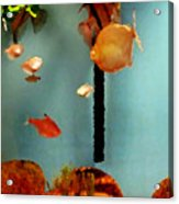 Gold Fish Life Acrylic Print