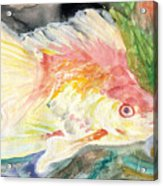 Gold Fish With Purple Acrylic Print