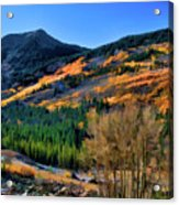 Gold In The Rockies Acrylic Print