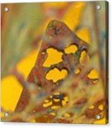 Gold Leaf 3 Acrylic Print