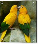 Gold Parakeets Acrylic Print