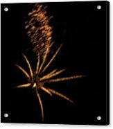 Gold Star Tail Acrylic Print