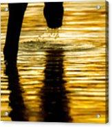 Gold Strike Acrylic Print