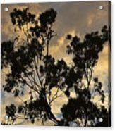 Gold Sunset Tree Silhouette I Acrylic Print
