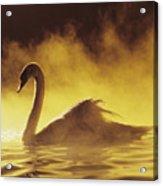 Golden African Swan Acrylic Print