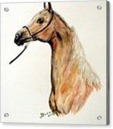 Golden Arabian Horse Acrylic Print