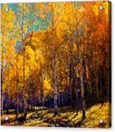 Golden Aspens Acrylic Print