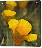 Golden Beauties Acrylic Print