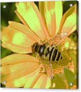 Golden Bee Acrylic Print