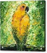 Golden Bird Acrylic Print