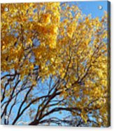 Golden Boughs Acrylic Print