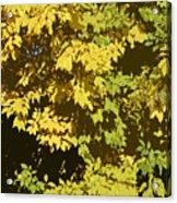 Golden Branches Acrylic Print