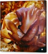Golden Brown Wild Mushroom Acrylic Print