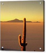 Golden Cactus Sunset Acrylic Print
