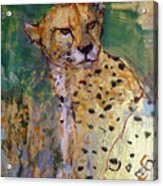 Golden Cheetah Acrylic Print